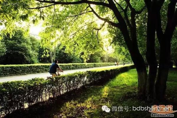 深圳最美的10条骑行线路