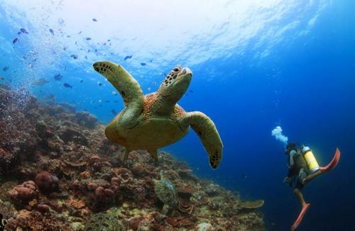 马来西亚 斯巴丹海底世界