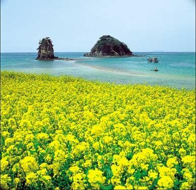 醉人济州岛 看南韩最美的春天