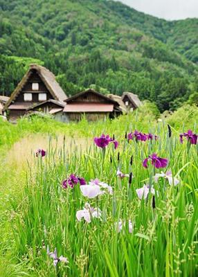 日本合掌屋:独有民宅建筑 世界文化遗产