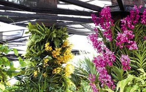 新加坡植物公园 纷繁胡姬花
