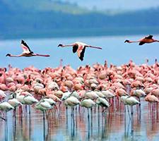 【约惠呼伦贝尔大草原】呼伦贝尔大草原、室韦恩和、根河湿地、满洲里双飞五日游