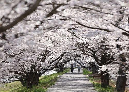 古城松江:探究日本文化的起源