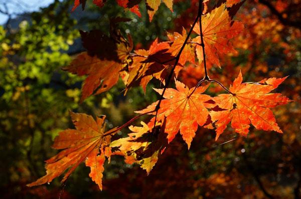 秋日摄影游:拍摄红叶的12个小技巧