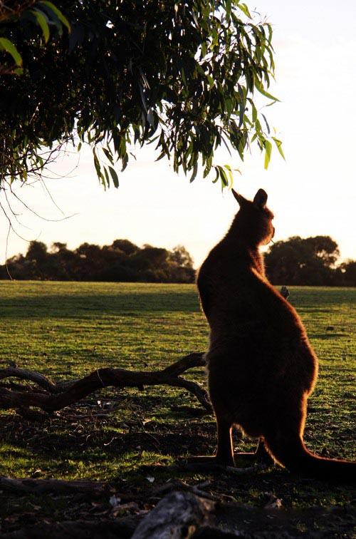 文艺时尚巧搭配 摩登澳洲的新味道