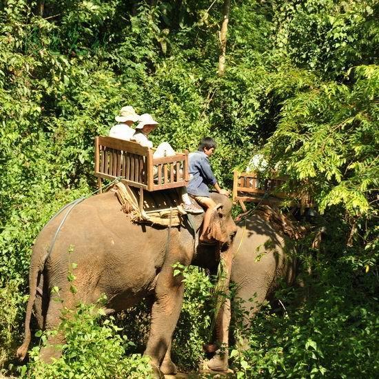 快乐的家 探访老挝沙耶武里大象保护中心