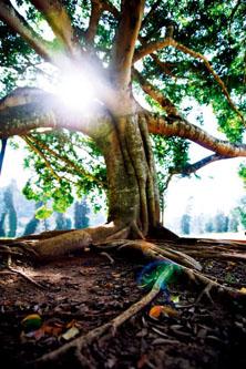 斯里兰卡迦耶 在阿育王缔造国度寻找迷人之最
