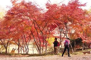 摄影技巧 9条贴士教你如何拍好秋天的红叶