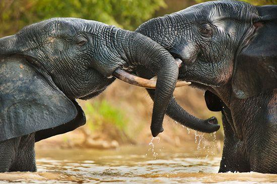 盘点西非五大野生动物园 贴近自然的旅程