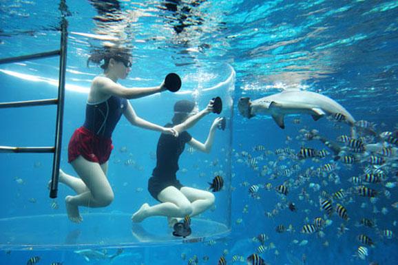 近距离邂逅鲨鱼 新加坡水上公园探险去
