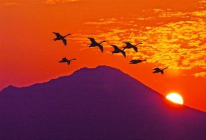柯南的故乡鸟取:沙海世界动漫王国