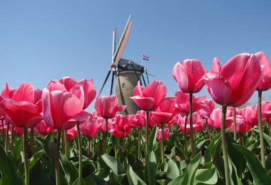 欧洲申根国家蜜月旅游之荷兰