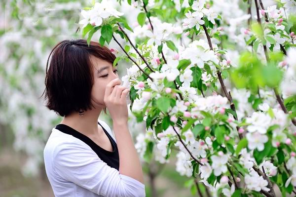 一片春心付海棠 河北怀来海棠花观赏乐虎国际官网
