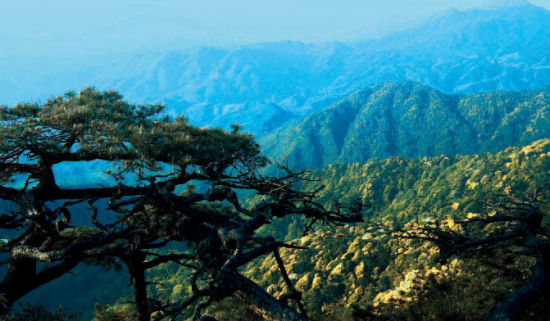 抚州七照:遨游文化江湖