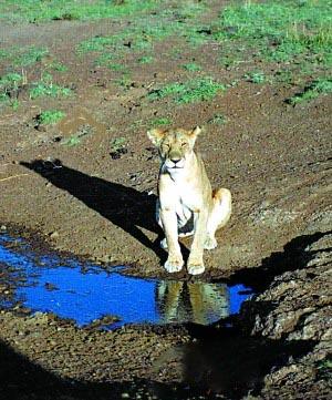 亲历《动物世界》去东非看动物迁徙