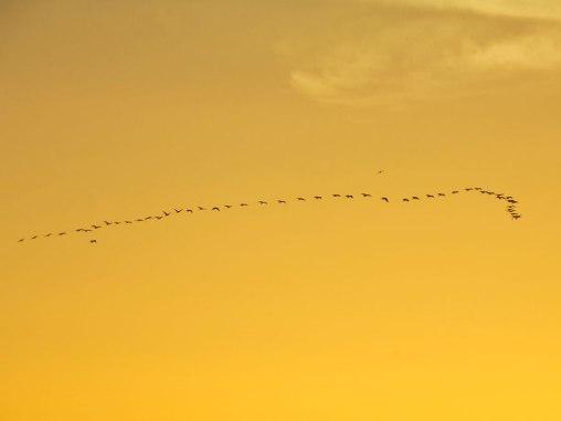 春季赴北非和中东观鸟全攻略