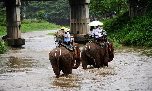 去老挝吉翁村 学做驭象人