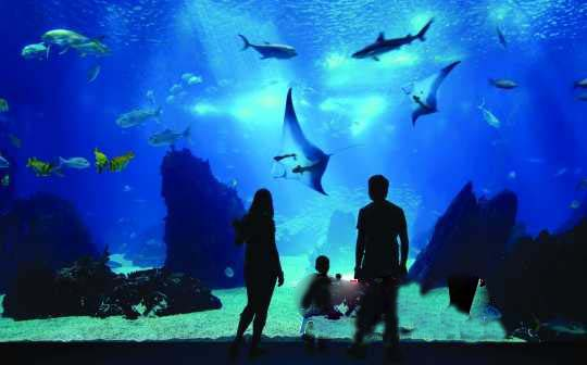 温暖的亲子乐园 新加坡圣淘沙感受海洋