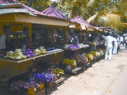 """斯里兰卡""""莲花街"""" 印度洋上的一朵莲花"""