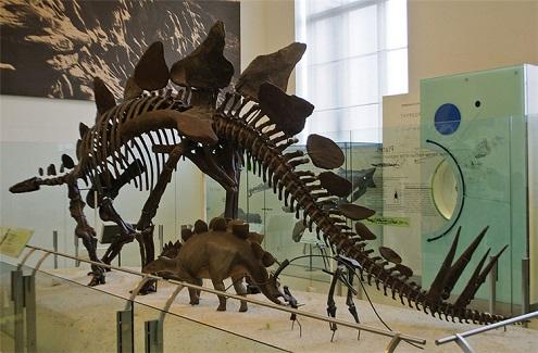 犹他州盐湖城景点:犹他州自然历史博物馆