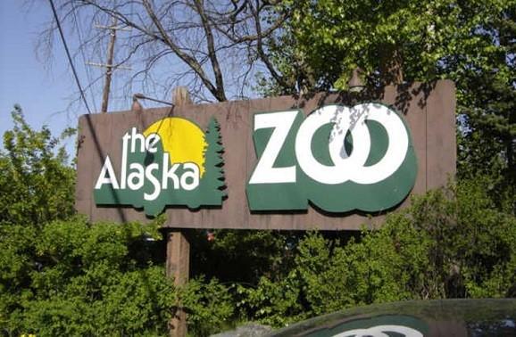 阿拉斯加州安克雷奇景点:阿拉斯加动物园