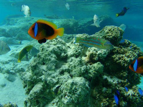 """新喀里多尼亚,被誉为""""世界尽头的天堂""""泻湖 珊瑚礁"""