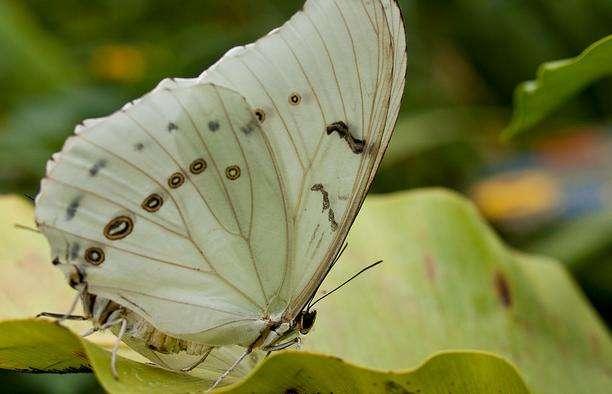 斯特拉特福蝴蝶园