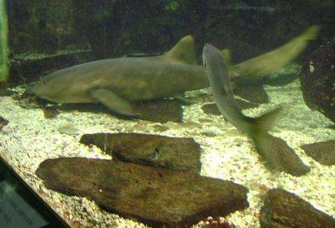 阿尔盖罗水族馆