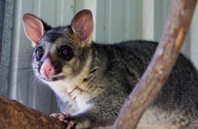 亨巴格灌木丛野生动物保护区_阿德莱德_澳大利亚