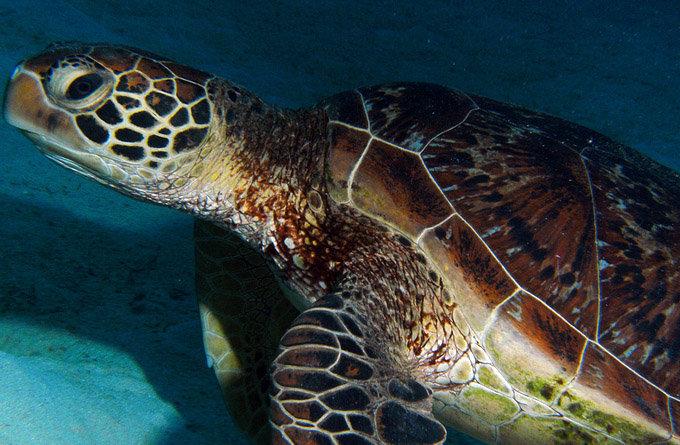 凯恩斯海底世界水族馆_凯恩斯_澳大利亚
