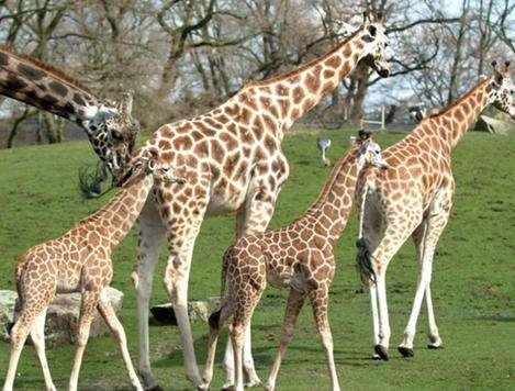 埃门动物园旅游
