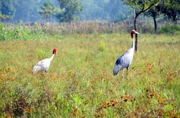 蓝毗尼鹤自然保护区_蓝毗尼_尼泊尔