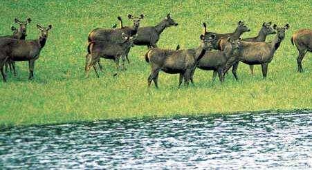 班迪普尔国家公园
