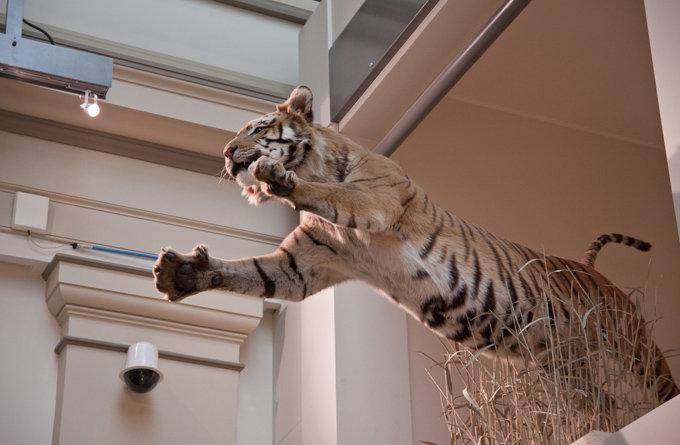 孟加拉自然历史博物馆_大吉岭_印度