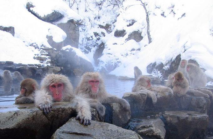 地狱谷野猿公园_长野 _日本