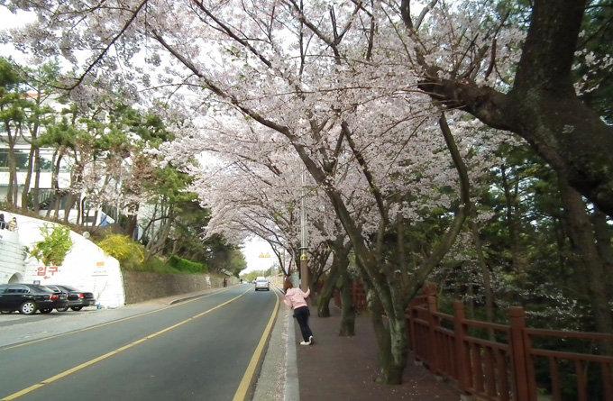 迎月路_釜山_韩国