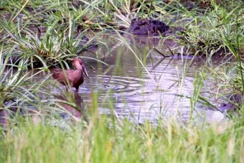 旺地国家公园旅游