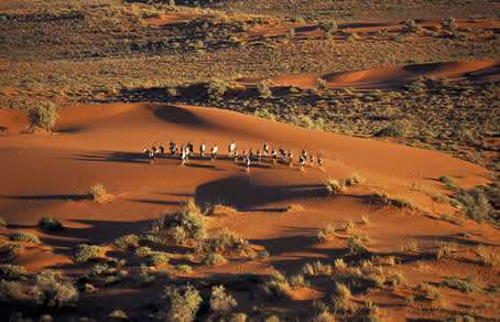 卡拉哈里沙漠旅游