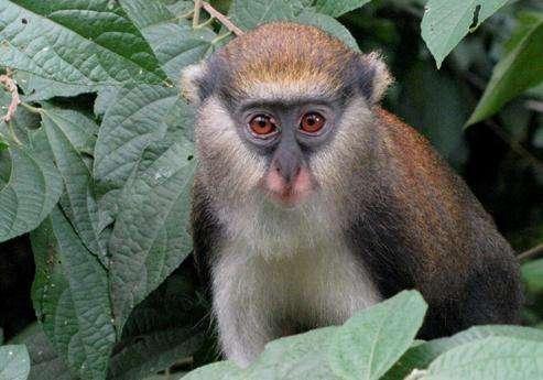 博阿本-非玛猴子保护区