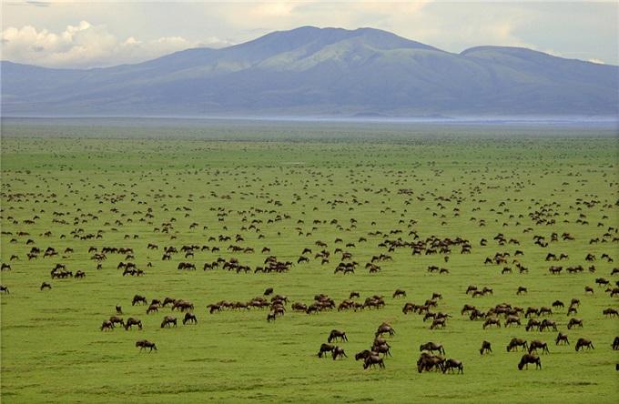 塞伦盖蒂国家公园_阿鲁沙_坦桑尼亚