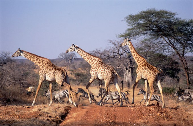 鲁阿哈国家公园_基戈马_坦桑尼亚