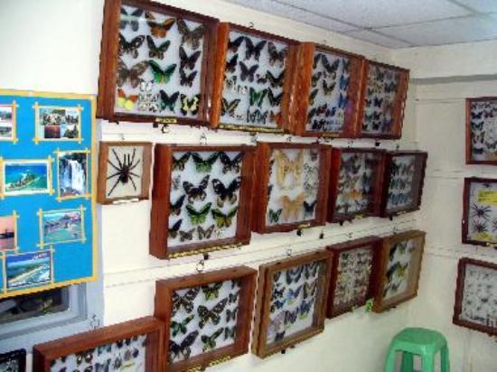 蝴蝶和昆虫博物馆