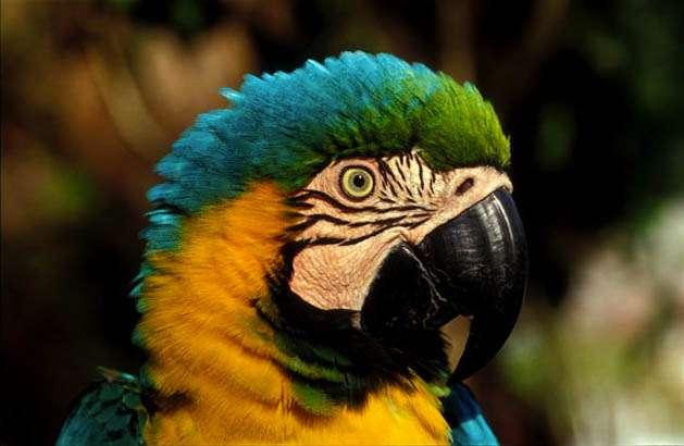 亚马逊雨林旅游
