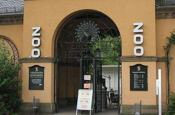 海德堡动物园旅游