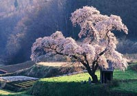 点击查看更多【草原+樱花】6万亩草原 千亩樱花 南国净土 遗落在人间的童话世界!美到落泪!相关信息